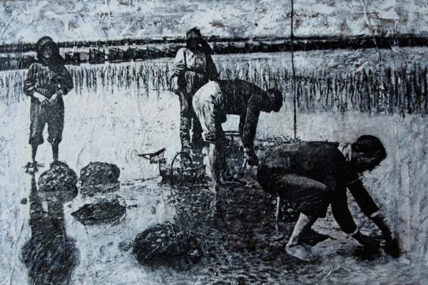 Ramassage des huîtres